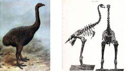 Científicos a punto de revivir aves extintas, al estilo «Jurassic Park», recreando su genoma