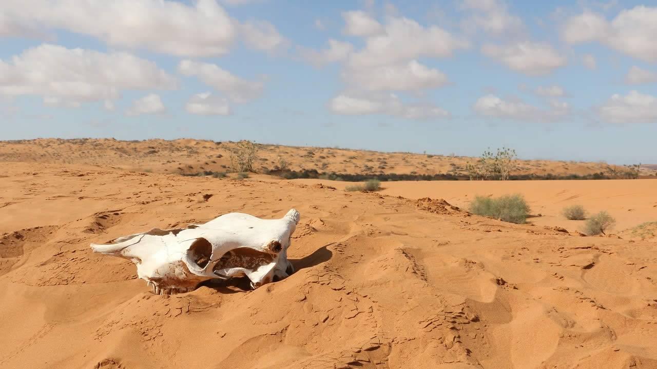 Desierto del Sahara aumentó su tamaño en un 10 por ciento