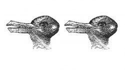 Esta ilusión óptica nos dice cómo el cerebro interpreta la información