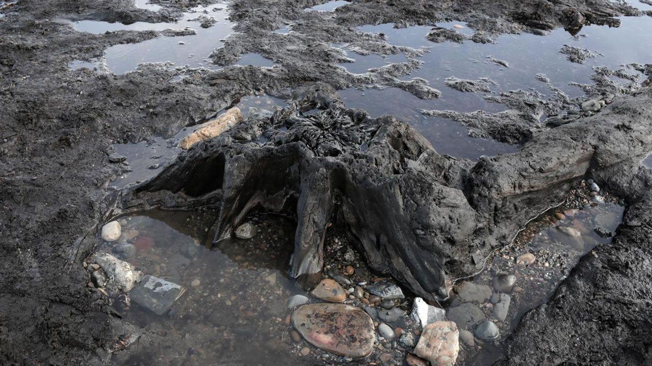 Hallan bosque prehistórico desenterrado por recientes tormentas en Inglaterra