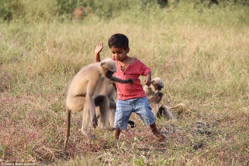 Samarth Bangari es aclamado como la reencarnación de un dios por su improbable amistad con una tropa de 20 monos langur con los que juega durante horas seguidas, a pesar de tener el doble de su tamaño