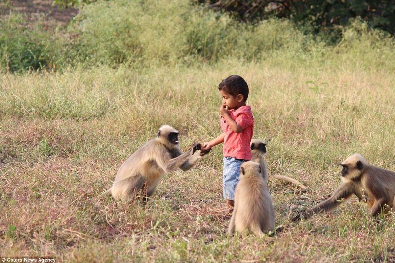 «Desde ese día, los monos comenzaron a visitar nuestra casa todos los días. Estamos acostumbrados a su presencia y a la hermosa relación de Samarth con ellos. Se ha convertido en una costumbre para todos nosotros ahora», dijo el Sr. Bangari