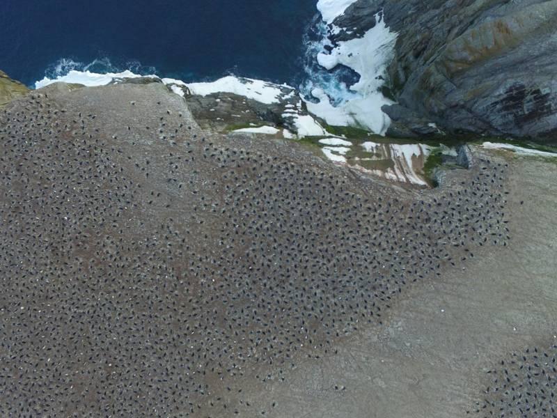 Imágenes aéreas que muestran una colonia reproductora de pingüinos Adelia en la isla Heroina, Islas Danger, Antártida
