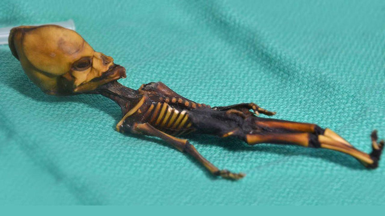 Secretos del «extraterrestre» de Atacama son revelados mediante el ADN