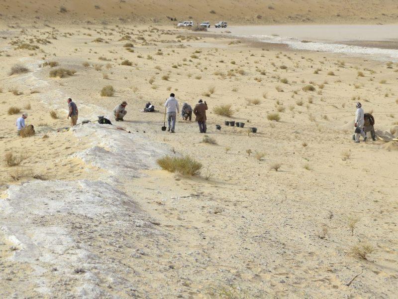 Vista general de las excavaciones en el sitio de Al Wusta, Arabia Saudita: la zona de color blanco es un antiguo lecho lacustre