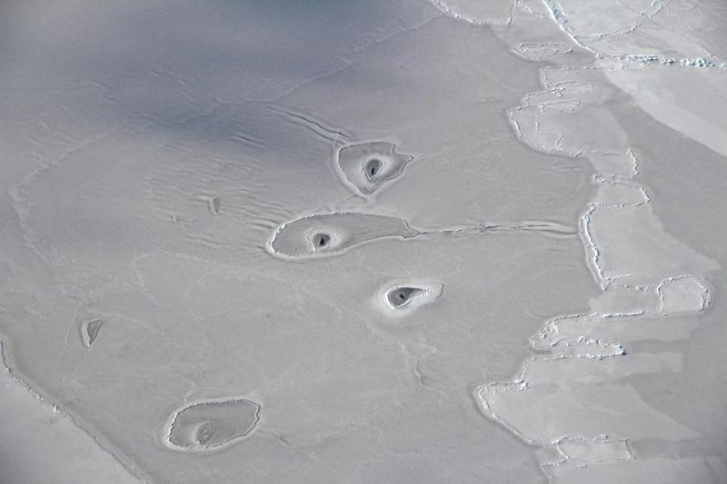 Los científicos han dicho que los agujeros podrían haber sido causados por mamiferos marinos
