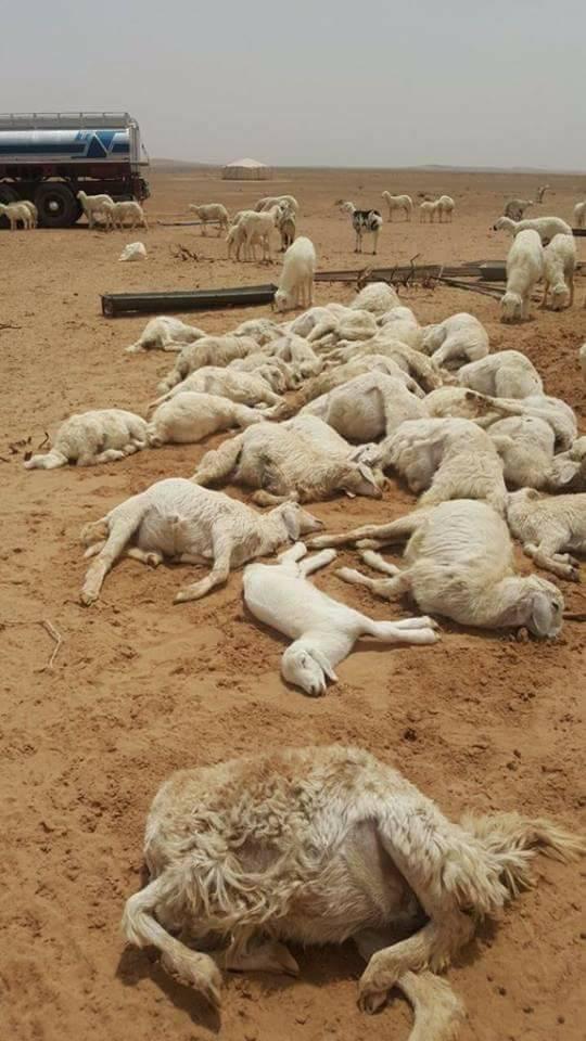 Cientos de animales perecieron a causa de la fuerte granizada