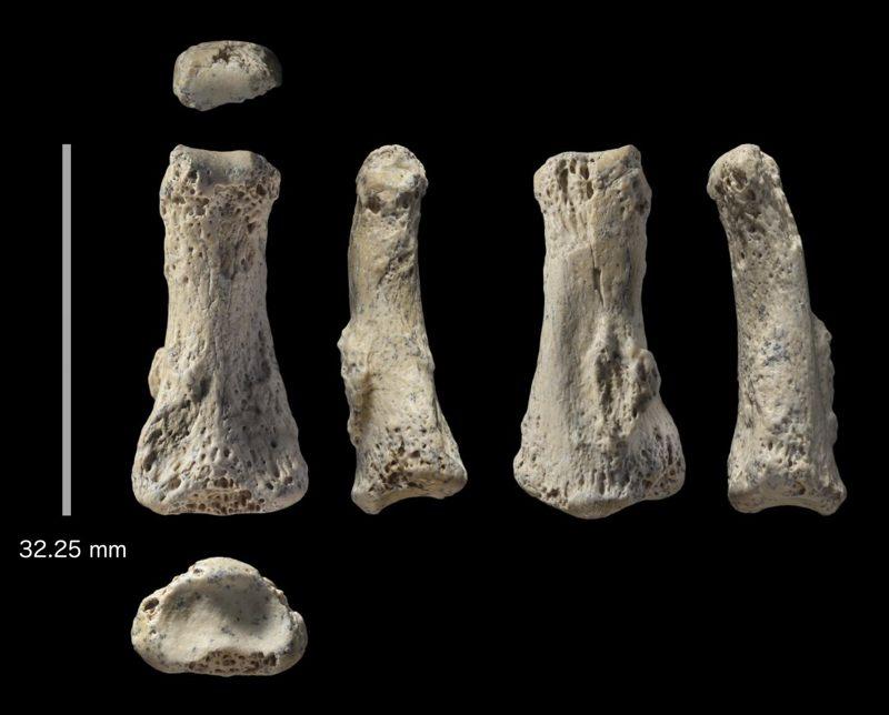 Fósil del hueso del dedo de un Homo sapiens encontrado en el sitio arqueológico de Al Wusta, Arabia Saudita