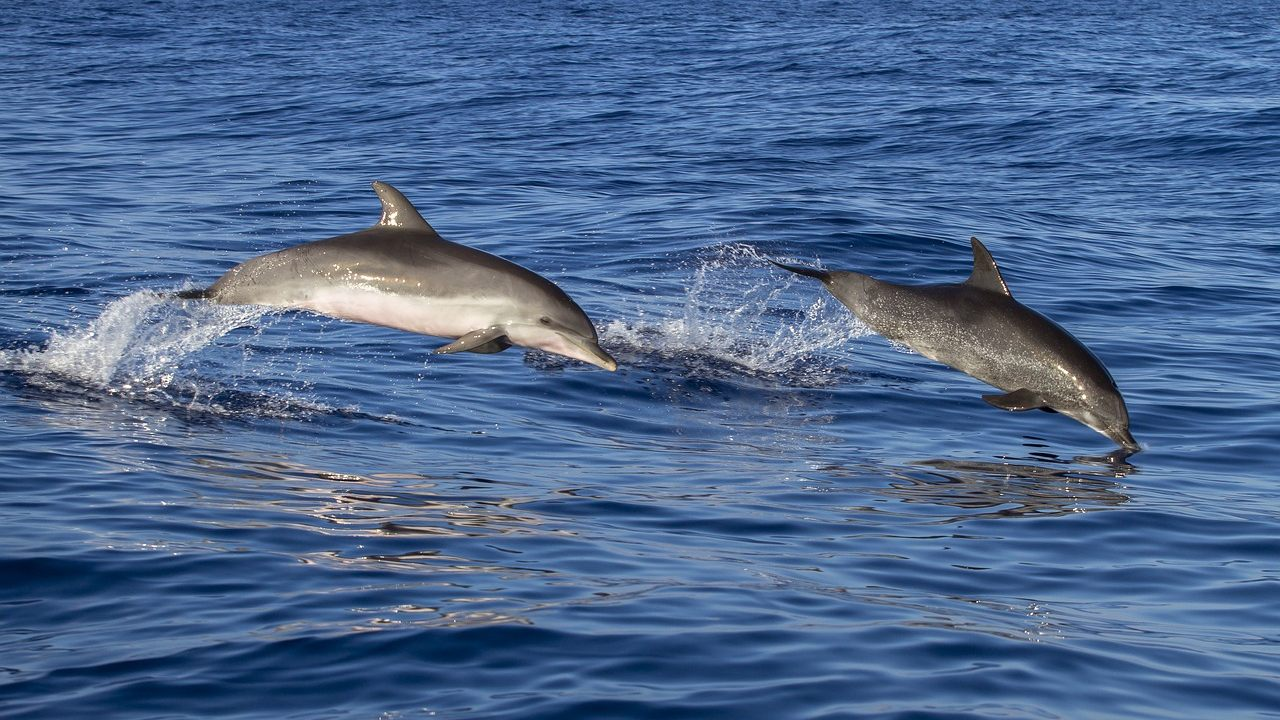 Hallan cientos de delfines muertos en bahía de Brasil