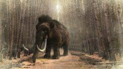 Investigadores están a punto de devolver a la vida al mamut lanudo