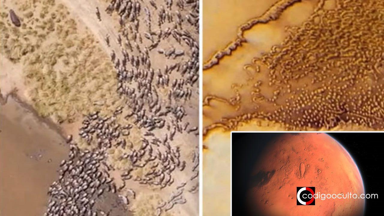 ¿Manadas de animales en Marte? Un vídeo plantea esta posibilidad