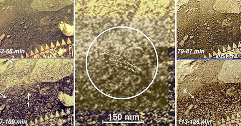 Posible organismo vivo en Venus