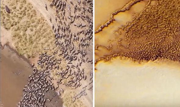 Imagen llamada el «rebaño de animales» en Marte (derecha) en comparación con los de la Tierra