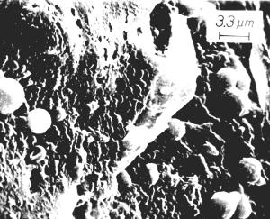 Imagen 2 - Luna 20: Fósiles similares a las bacterias cocoideas modernas Siderococcus o Sulfolobus, litificación por hierro metálico. (Barra de escala superior = 1.2 micrómetros).