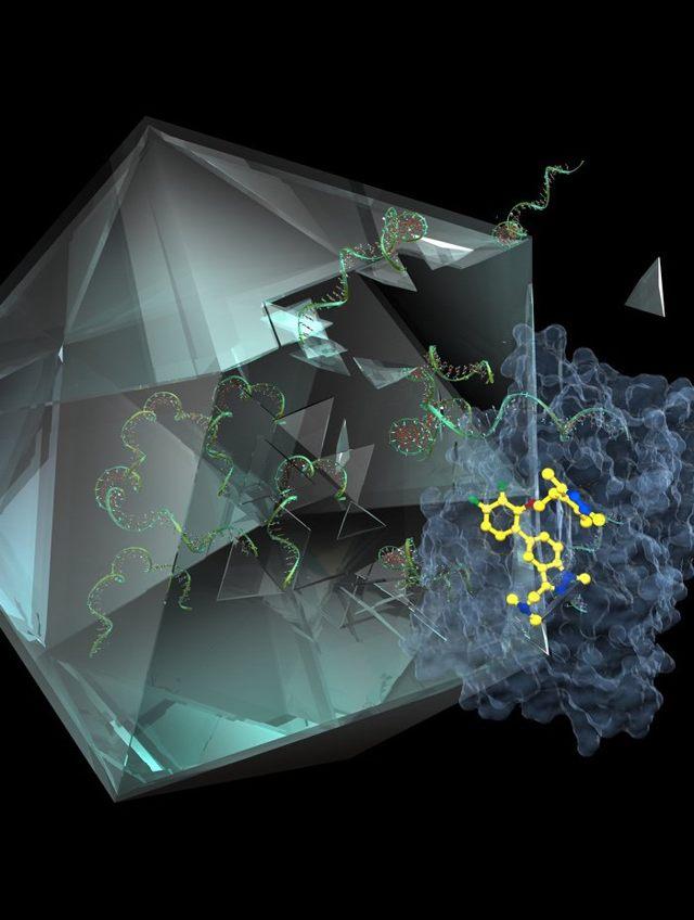 IMP-1088 (en amarillo) bloquea el NMT humano (en azul), evitando el despliegue de la cápside viral (verde)