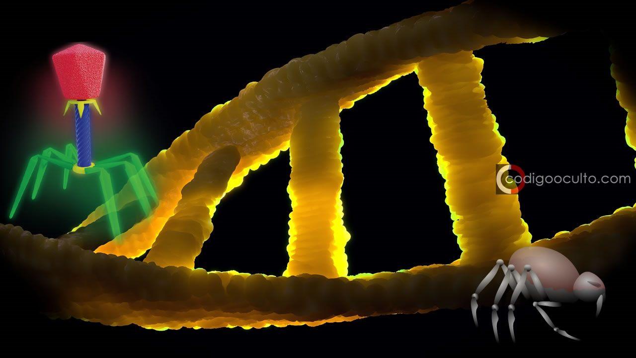 La forma del ADN cambiada por los científicos podría crear máquinas y computadoras diminutas