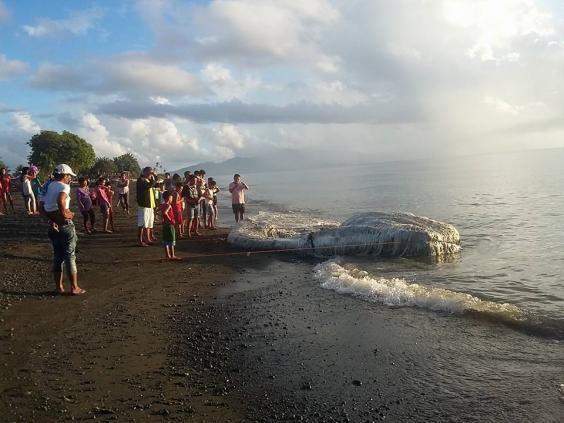 Los residentes acuden en masa para ver a la criatura marina «globster» en la provincia oriental de Mindoro, Filipinas