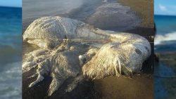 «Monstruo marino» aparece en Filipinas, causando temores por desastres naturales