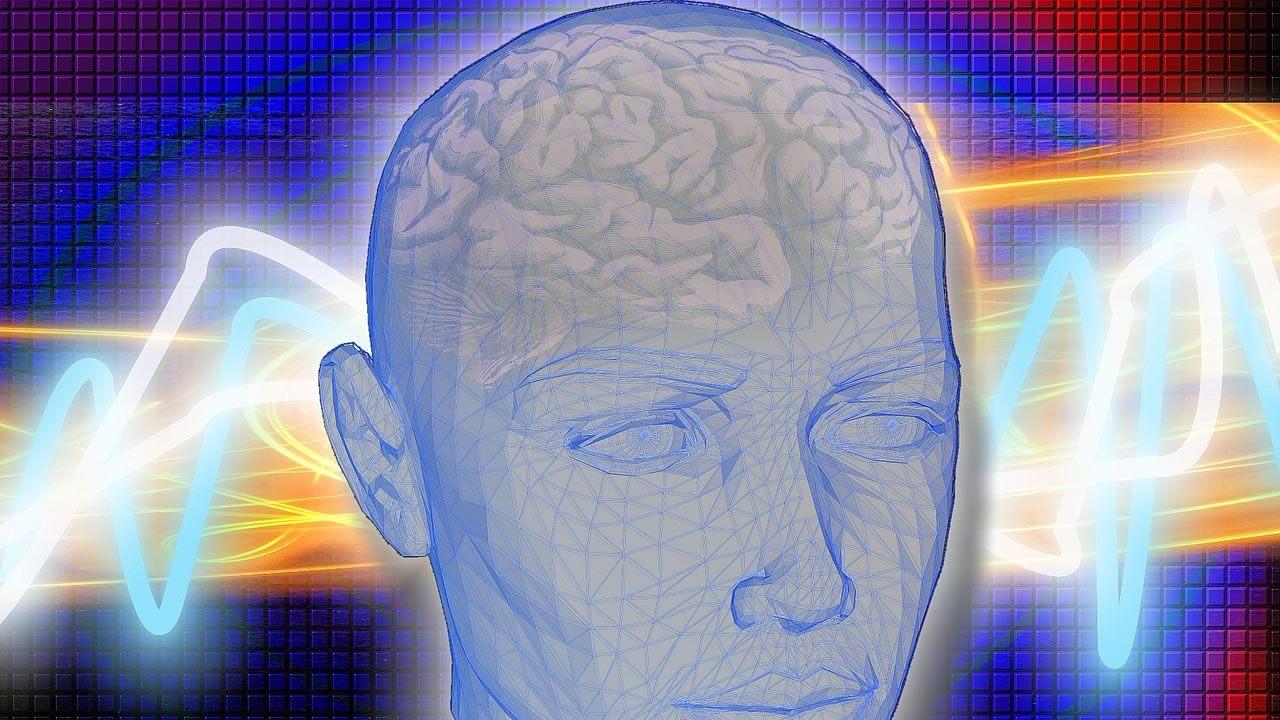 Gran aumento en la corteza cerebral podría indicar una evolución única del cerebro humano