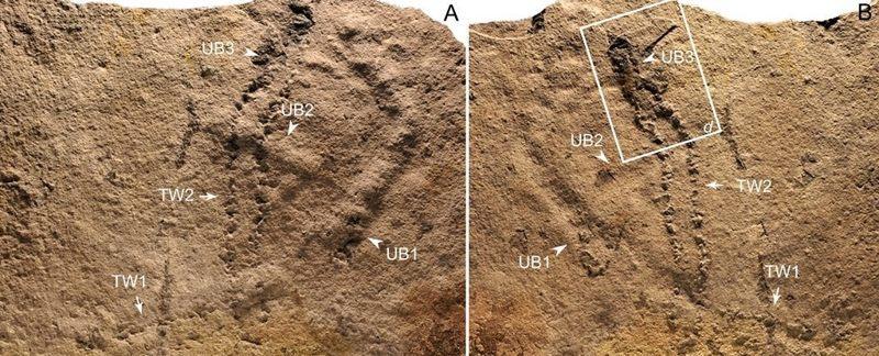 Los científicos creen que estas huellas pueden haber sido causadas por algún tipo de artrópodo o anélido