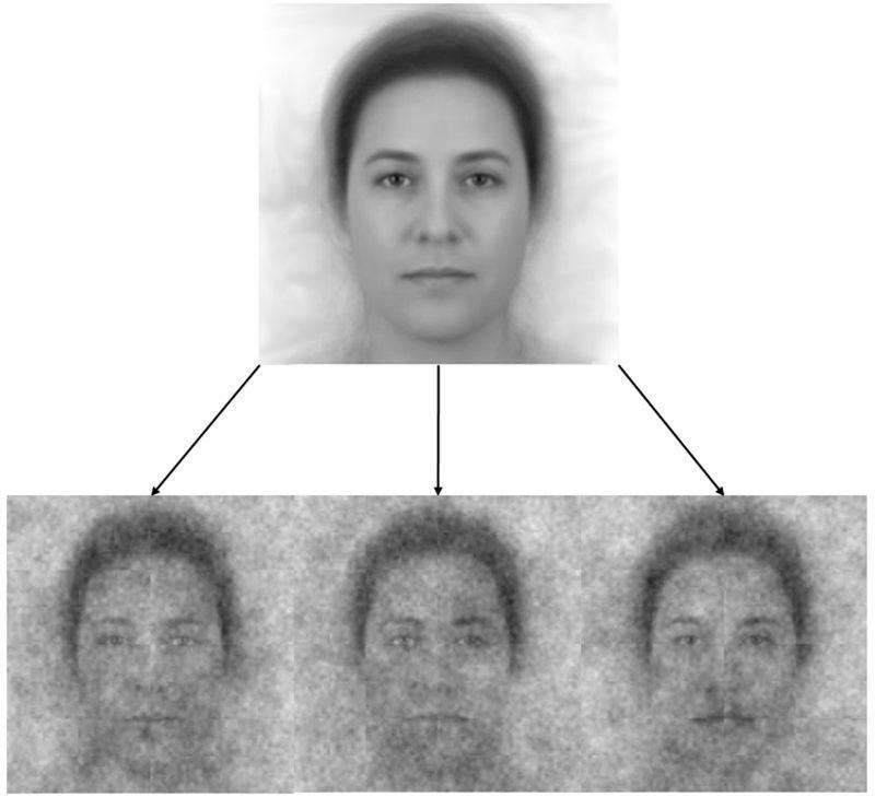 La imagen base (un compuesto de 50 caras que representa la demografía colectiva de la población de EE. UU.) Y tres de los 300 modelos creados al agregar ruido visual a la imagen base