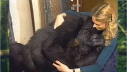 Koko, la gorila que se comunicaba mediante señas, ha muerto