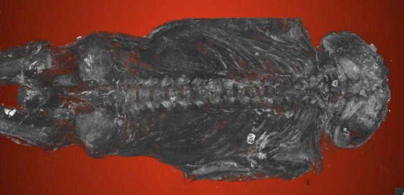 Las exploraciones con micro-TC determinaron que una «momia de halcón» en el Museo Maidstone en el Reino Unido era en realidad, un feto humano con anormalidades congénitas graves, incluyendo un cráneo y vértebras malformados. Los escaneos son los más detallados de cualquier momia fetal hasta el momento