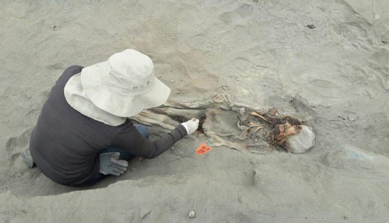 Meses atrás fueron presentados los restos óseos de más de 140 niños y 200 llamas jóvenes encontrados en el sector Las Llamas, en Huanchaquito, a pocos kilómetros de donde fueron hallados estos nuevos 56 esqueletos