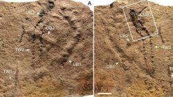 Un misterioso animal dejó estas huellas hace 550 millones de años