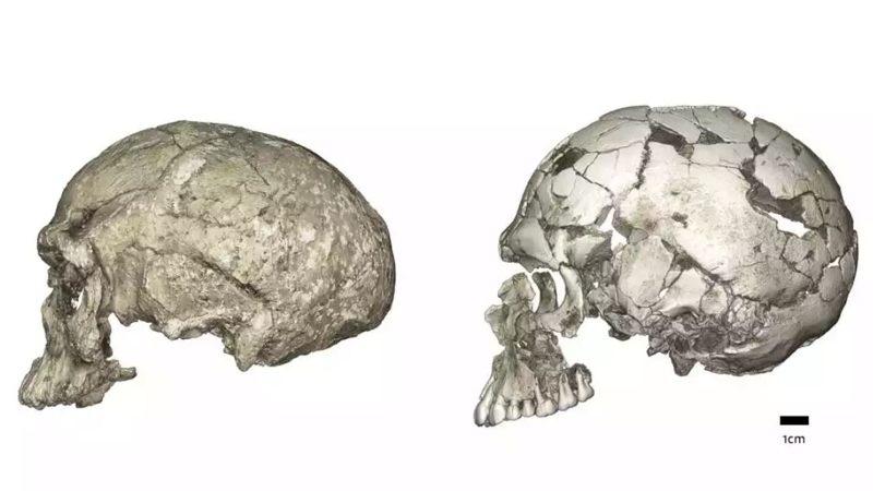 Se observan cambios evolutivos entre los huesos del cráneo de dos Homo Sapiens diferentes. Nuevos hallazgos sugieren que los humanos modernos evolucionaron en poblaciones dispersas por el continente africano