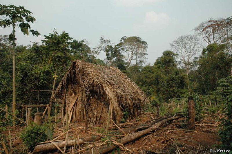 El hogar del último sobreviviente conocido de una tribu amazónica asesinada por ganadores.
