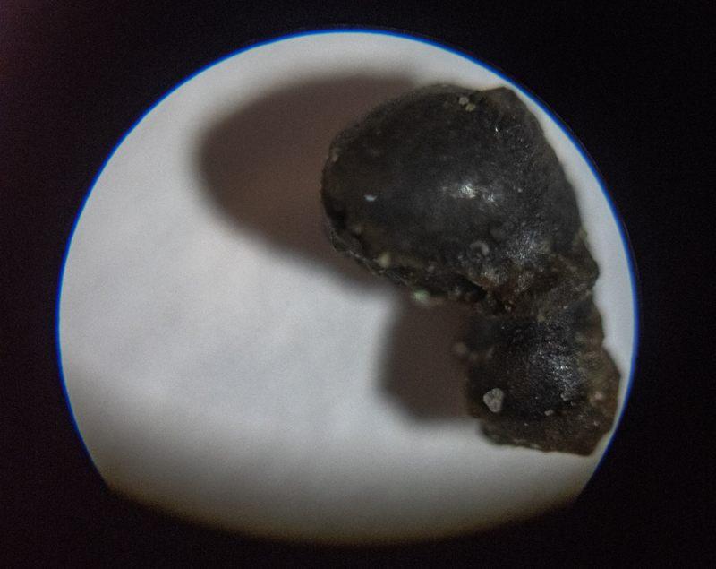 Análisis visual inicial de las muestras recolectadas. Los hallazgos preliminares incluyen dos pequeños fragmentos de corteza de fusión.