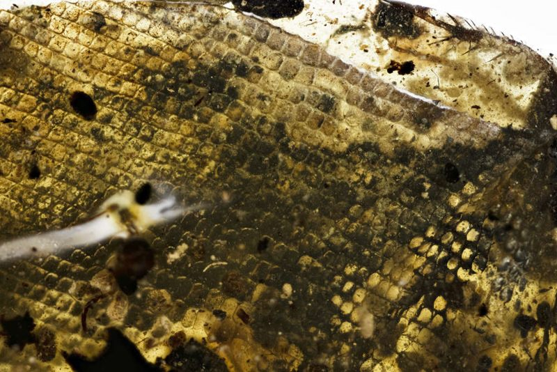 Vista detallada de escalas con mayor intensidad de pigmento en el fragmento de piel de serpiente, DIP-V-15104