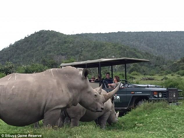 Rinocerontes en la Reserva de Sibuya
