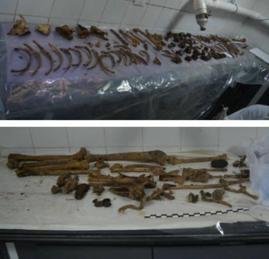 Restos hallados en el interior del sarcófago negro.