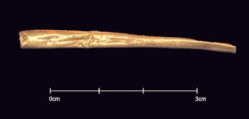 Láminas doradas encontradas al examinar los esqueletos en el sarcófago de Alejandría.