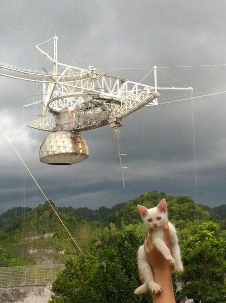 Un gato llamado Squeakazoid posa con el segundo radiotelescopio más grande del mundo en el Observatorio de Arecibo en Puerto Rico