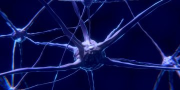 Científicos hallan un nuevo tipo de neurona que podría ser única en humanos