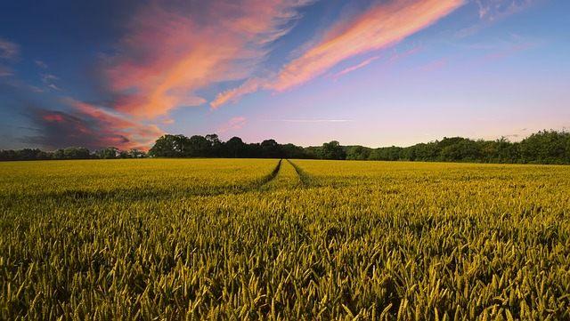 Las partículas inyectadas en la atmósfera no pueden detener el daño a los cultivos causado por el aumento de las temperaturas globales, de acuerdo con el último análisis.