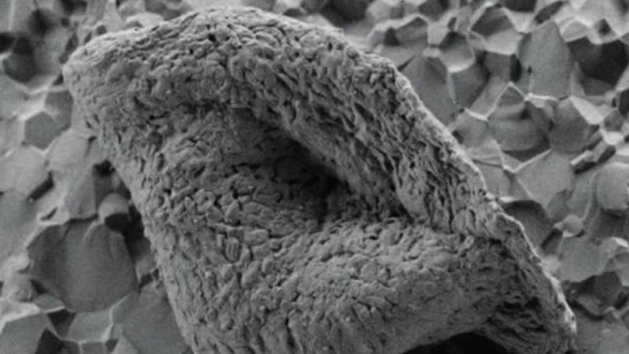 Diminutas rocas de Australia podrían contener la vida más antigua de la Tierra