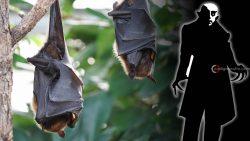 Escritor que fue mordido por murciélagos, no enfermó en 50 años