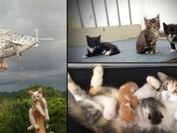 Los «gatos espaciales» del Observatorio de Arecibo necesitan tu ayuda