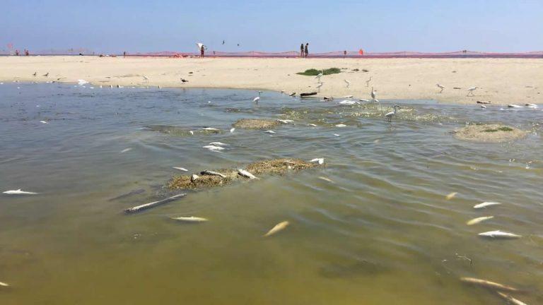 Más de 2.000 peces mueren «cocinados» en laguna de Malibú