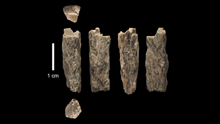 Neandertales y Denisovanos se aparearon, los huesos de un híbrido han sido hallados