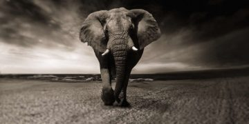 87 elefantes son asesinados en uno de los mayores incidentes de caza furtiva