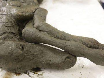 Científicos clonarán el potro preservado por 40.000 años en Siberia