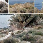 Enorme tela de araña de 300 metros cubre durante la noche una playa de Grecia