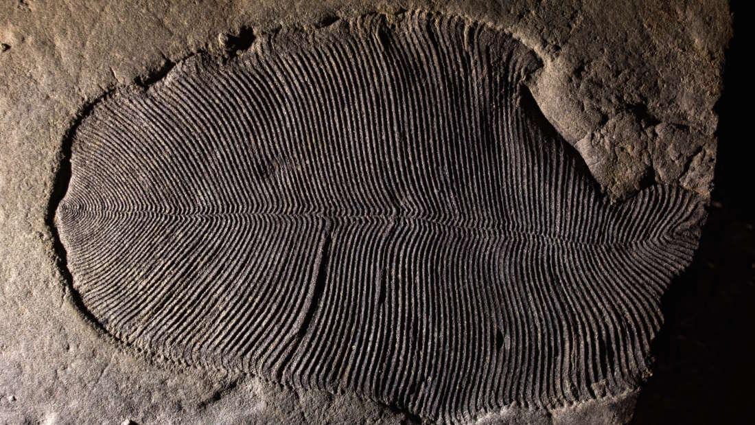Hallan peculiar fósil del animal más antiguo de la Tierra