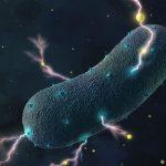 ¿Sabías que las bacterias de tu intestino producen electricidad? Estudio lo confirma