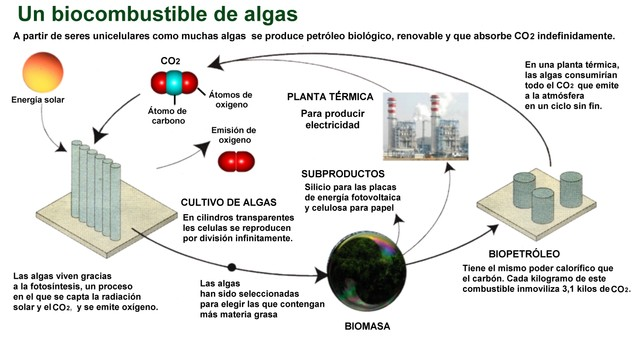 Gráfico para la producción de un biocombustible a partir de algas marinas